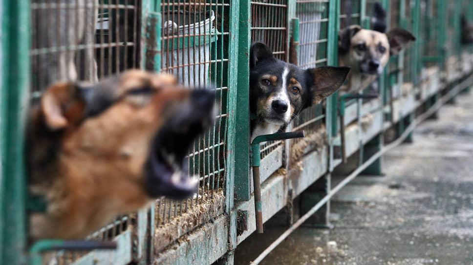 Зоозащитники призывают Минприроды покончить с бесприютной жизнью животных