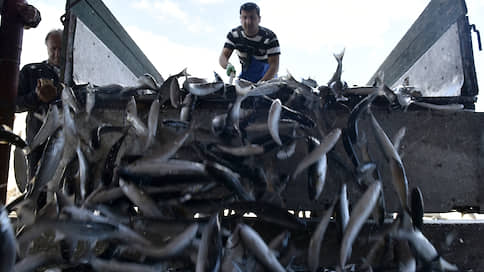 Из рыбы вычищают льготы  / ФАС хочет ограничить налоговые послабления для отрасли