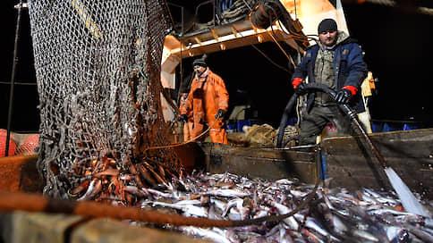 Минтай застрял в упаковке  / Производители рыбы остались без припасов
