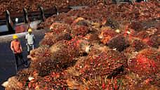 Пальмовое масло замедлило разлив  / Темпы импорта продукта в Россию снижаются