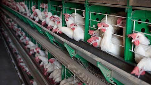 Куры снесли невозвратные кредиты // Закончено дело о махинациях на Вельской птицефабрике