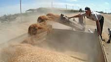 Зерно приросло к Сибири  / Продавцы столкнулись с ограничениями вывоза в другие регионы