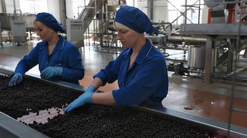 Дикоросы попросились в бюджет  / Переработчики ягод и грибов тоже хотят льгот