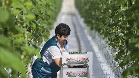 «Система» вышла из теплиц  / Агрохолдинг «Степь» продал агрокомбинат «Южный»