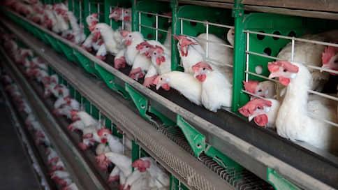 Долги за курицу взыщут сахаром // Симбирск бройлер привлекают к ответственности