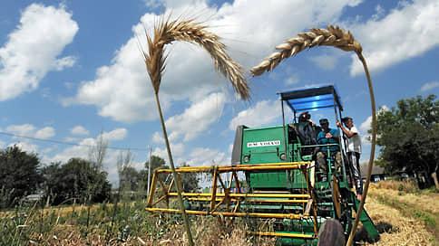 Цены висят на колоске  / Стоимость российской пшеницы бьет многолетние рекорды