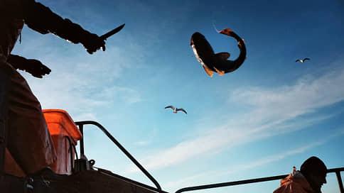 Минтайное становится явным  / С избытком рыбы предложено бороться госзакупками
