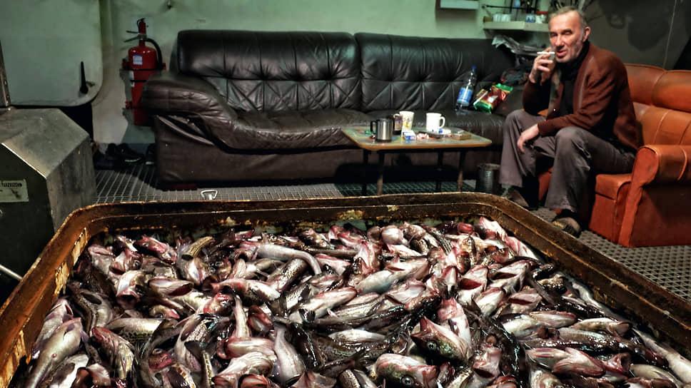 Новая минтайность / Поставки рыбы остановились из-за опасений обвала цен
