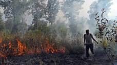 В России снова запахло дымом  / Регионы приступили к сезонной борьбе с лесными пожарами