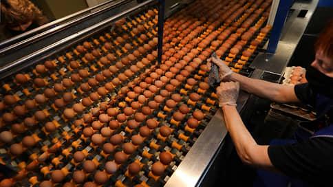 Бройлерам подбирают яйца // Сибагро может расширить птицеводческий дивизион