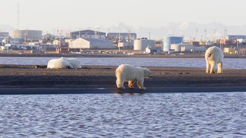 Джо Байден наступил нефтяникам на заповедное  / Президент США под напором экологов запретил добычу нефти и газа в заповеднике на Аляске