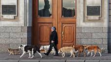 Усы, лапы и хвост — вот его документы  / Депутаты Татарстана предложили регистрировать всех кошек и собак