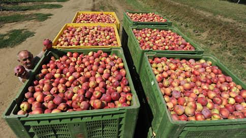 Яблоки давит импортом  / Российские садоводы жалуются на падение рентабельности