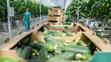 Овощи собираются на Урале  / ГК «Рост» может купить конкурента в Челябинской области