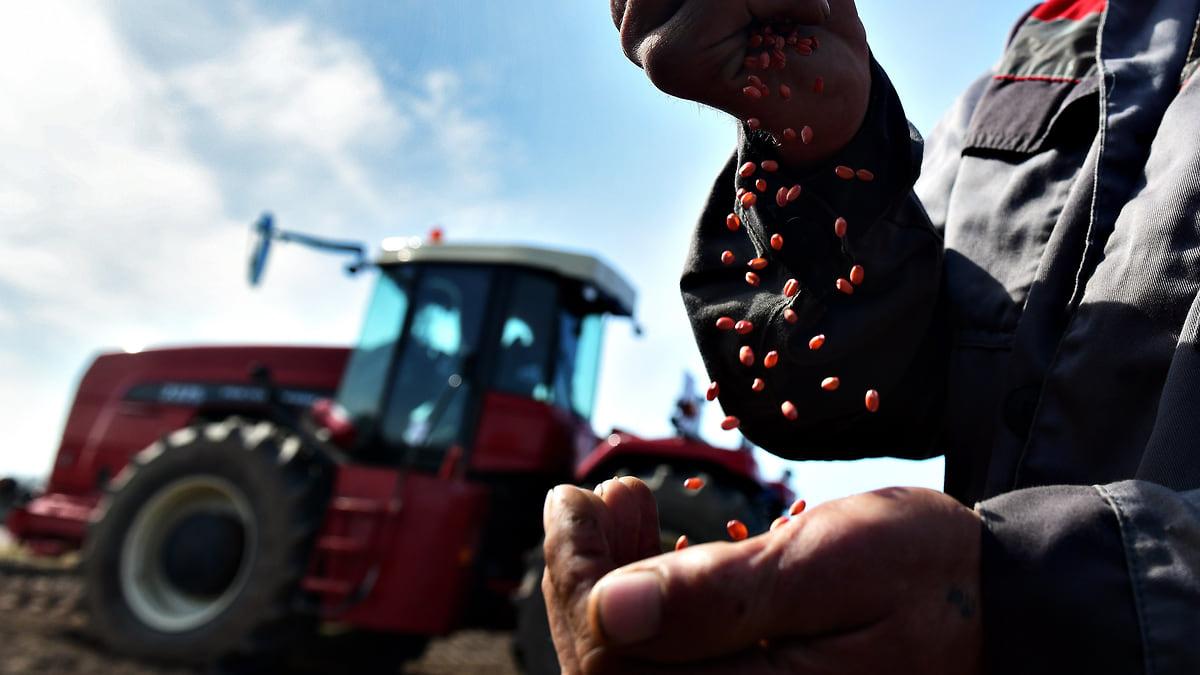 Зерно замкнулось в России