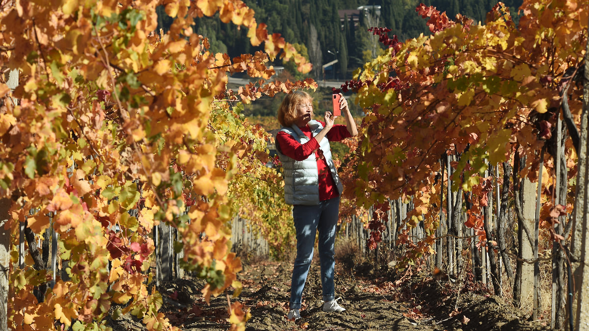 Себестоимость закладки виноградников выросла почти на 50%. Цены на вино могут вырасти