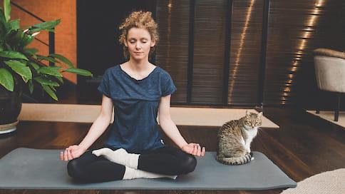 Коты, козы и собаки  / Необычные виды йоги