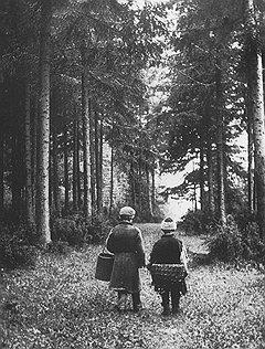 В 1840 году, заботясь о будущих поколениях, Николай I запретил в будущем пускать леса на дрова