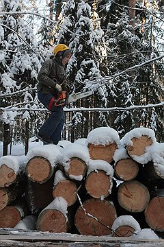 В этом году для расширения просек под линии электропередачи будет вырублено 65 тыс. га леса
