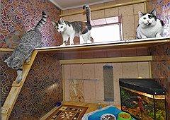 Оставляя в зоогостинице нескольких кошек, можно не беспокоиться, что звери будут скучать друг по другу: их поселят в один номер