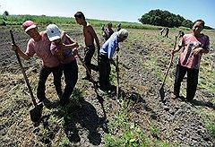 """Секрет аграрного """"китайского чуда"""" на российской почве не в особых технологиях, а в работе с огоньком"""