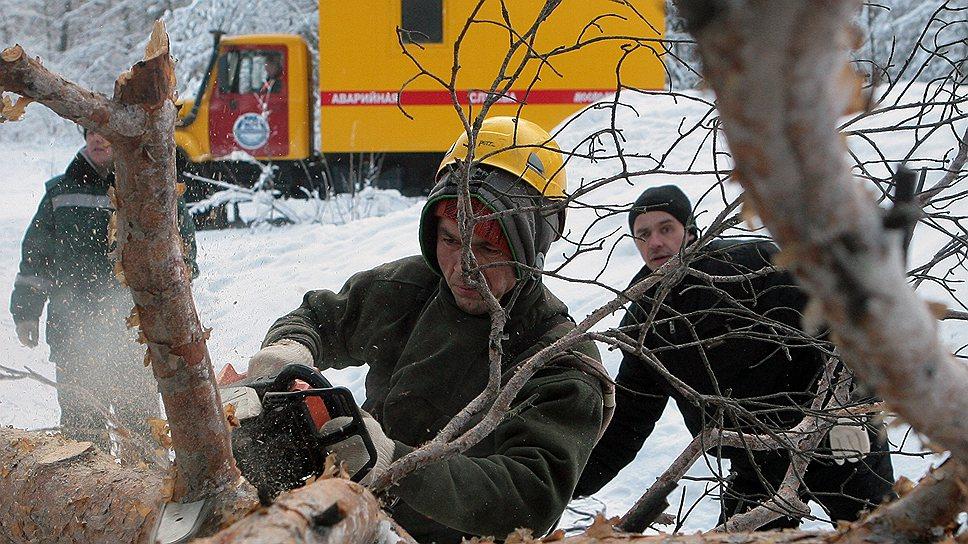 Жуков стало очень много потому, что стало очень мало тех, кто убирает засохшие больные деревья