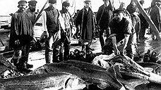 Дело о преступлениях в рыбных местах