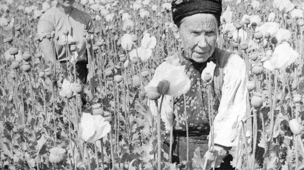 МВД СССР предлагало заменить посевы киргизского опийного мака украинским масличным