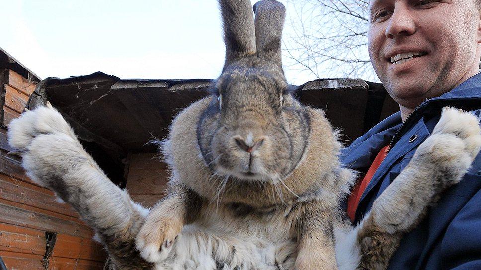 Подмосковная дачная кооперация: кролик Николая Ионова оплодотворил крольчиху Татьяны Хохловой