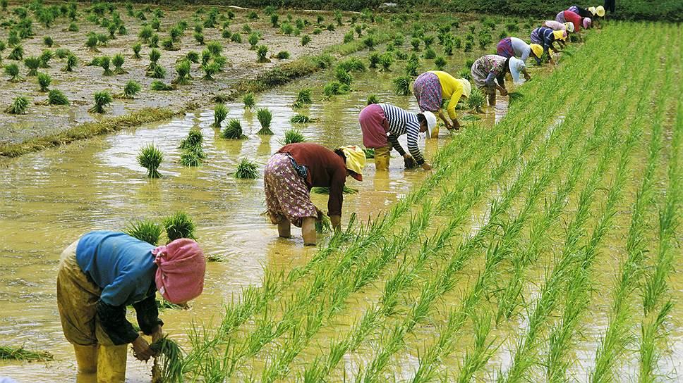 Сложное и трудоемкое рисовое земледелие воспитало в корейцах трудолюбие, коллективизм и уважение к технологиям