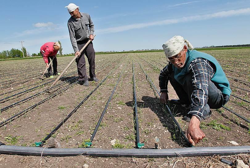 Водный кризис заставил фермеров задуматься об экономичном капельном орошении