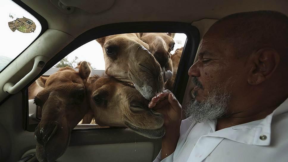 Даже пересев на комфортабельные авто, саудиты не хотят расставаться с традиционными ценностями