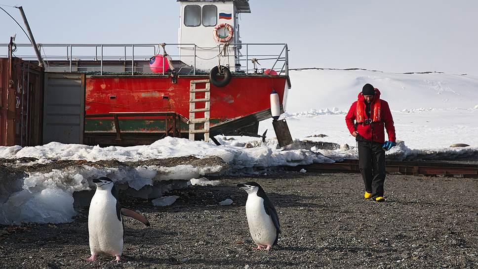 Полярники не пытаются приручать пингвинов, что не мешает последним живо интересоваться людьми