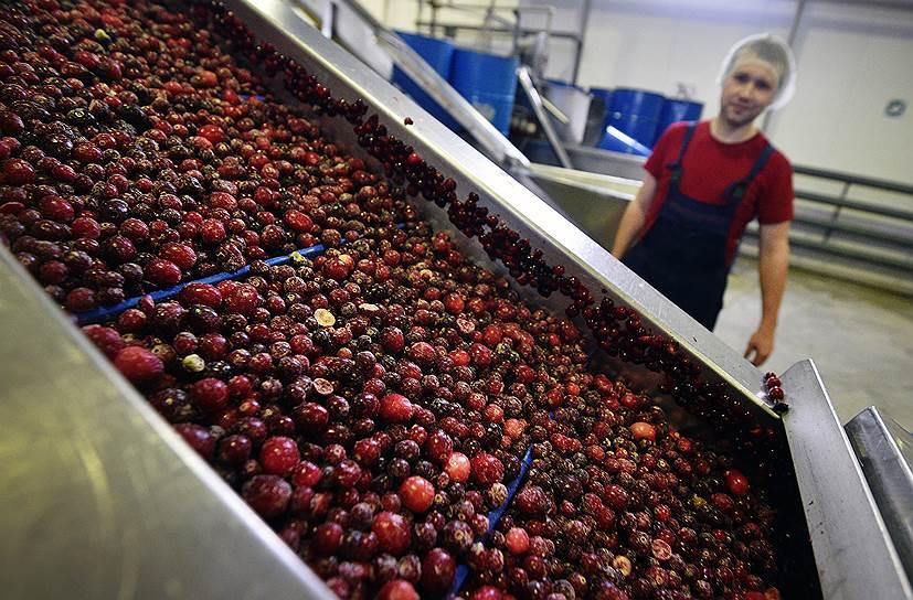 Северная ягода — одно из богатств Вологодской области: это и дополнительный доход для населения, и перспективный продукт для местного бизнеса