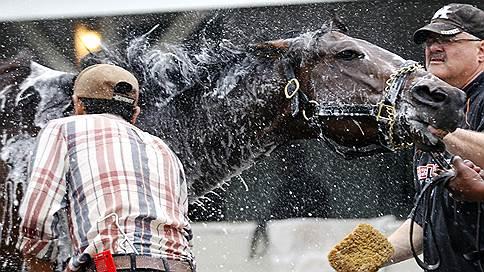 Лошадиная жила  / Как Темур Шакая въехал на фармрынок на белом коне