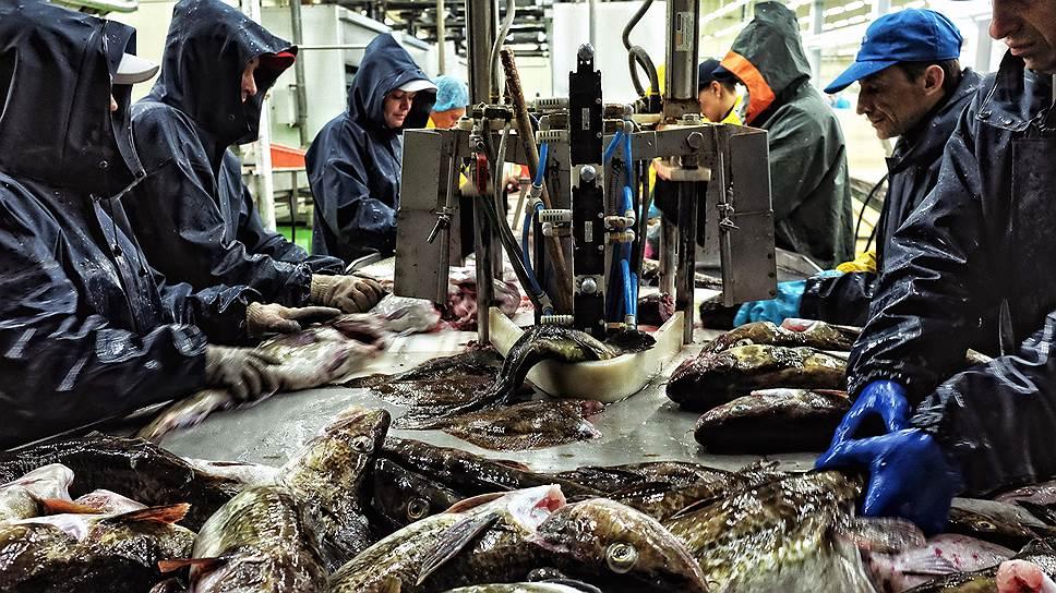 В России рыбу практически негде перерабатывать, но главное — не на чем ее везти