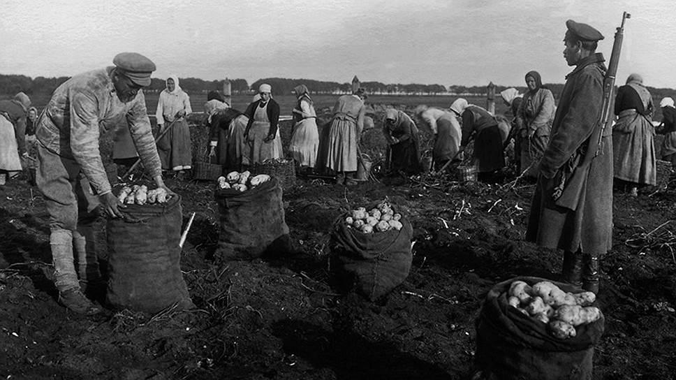 Сбор урожая под дулами винтовок был вполне обычным делом во времена продразверстки