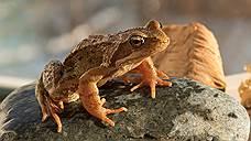Травяная лягушка распространена в Европе от Пиренеев до Арктики. В обогреваемых Атлантикой регионах она зимует как в водоемах, так и на суше в сырых местах. Но в северо-восточной части ареала (на Северном и Среднем Урале) — исключительно в горных непромерзающих реках.