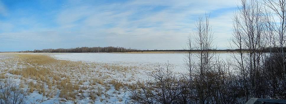 Озеро Клешенское в Амурской области. Содержание кислорода в воде к марту падает до 0,2–0,3мг/л, однако эта экстремальная гипоксия — не препятствие для успешной зимовки в нем тысяч сибирских лягушек