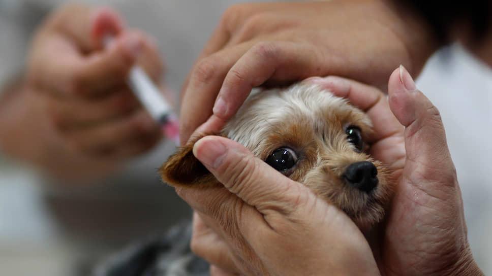 коронавирус у собак вакцинация