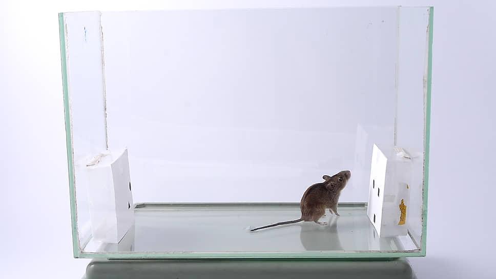 Особо одаренный зверек – Николя Второй – прожил четыре года (рекорд для мелкого грызуна в неволе) и продолжал проходить тесты с высокой точностью до самой кончины
