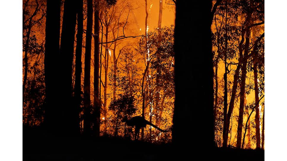 Австралия и так-то не очень лесной материк (ими покрыто менее пятой части территории), да еще 13,5% этих лесов сгорело в череде пожаров конца прошлого — начала нынешнего года