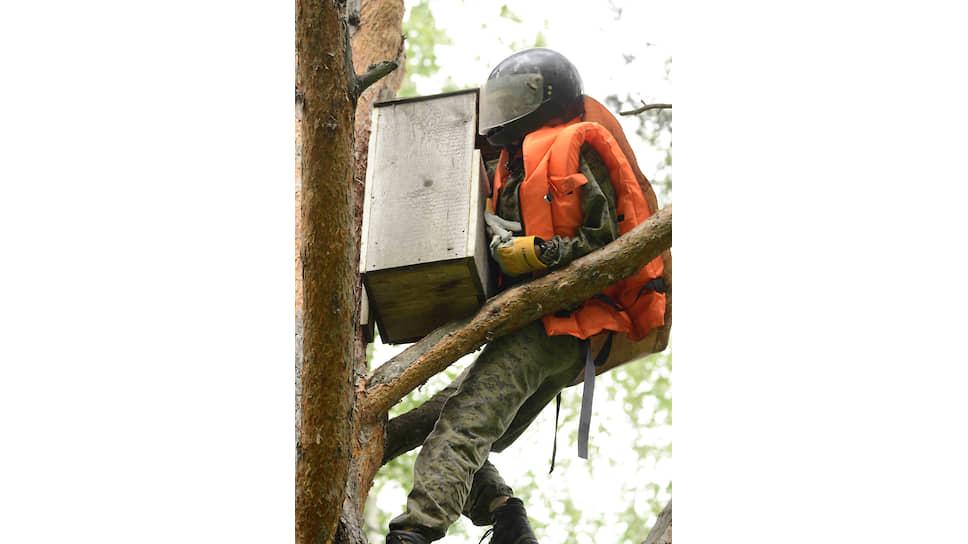 Лена Шнайдер лезет в дуплон в новосибирском Академгородке – высаживать совят
