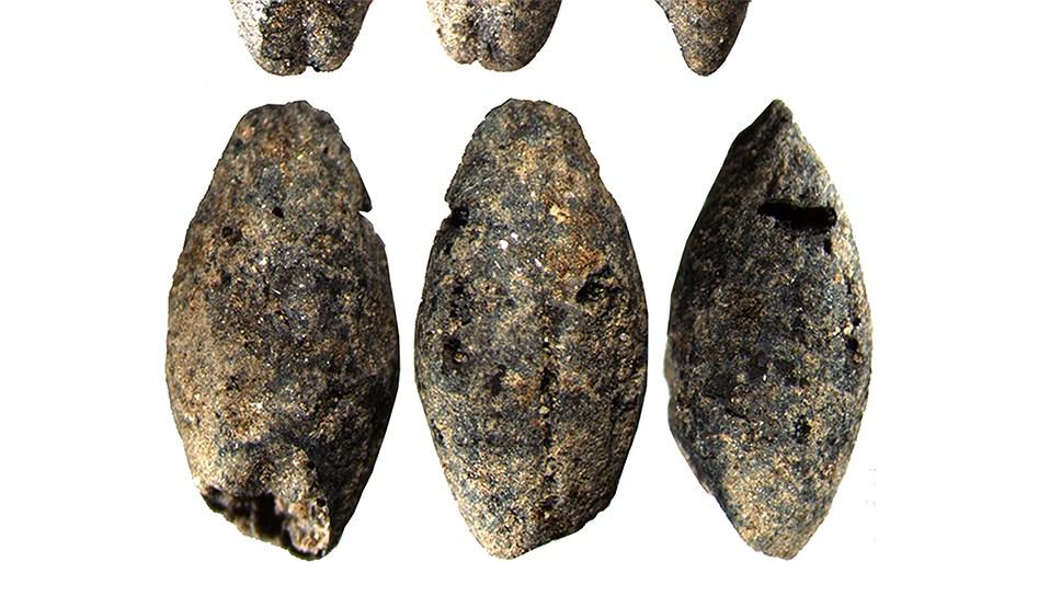 Зерна ячменя и пшеницы найденные при раскопках на Аландских островах