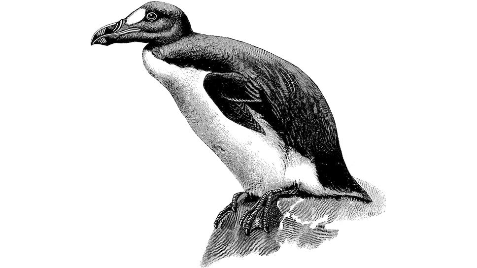 Смерть пингвина