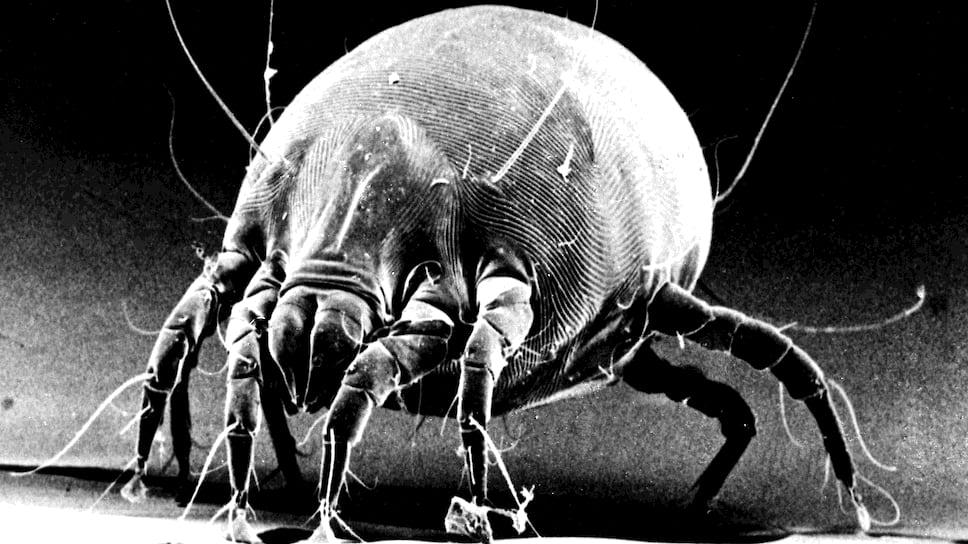 Сериал про аллергию: пыль, а в ней клещи