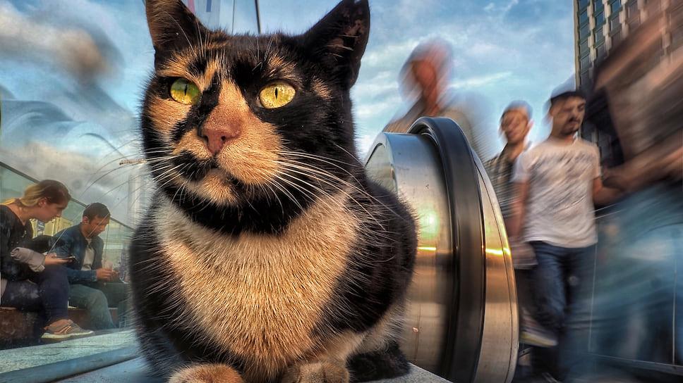 В чем особенность аллергии на кошек