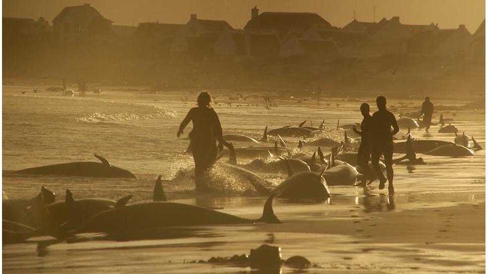 Смерть в океане