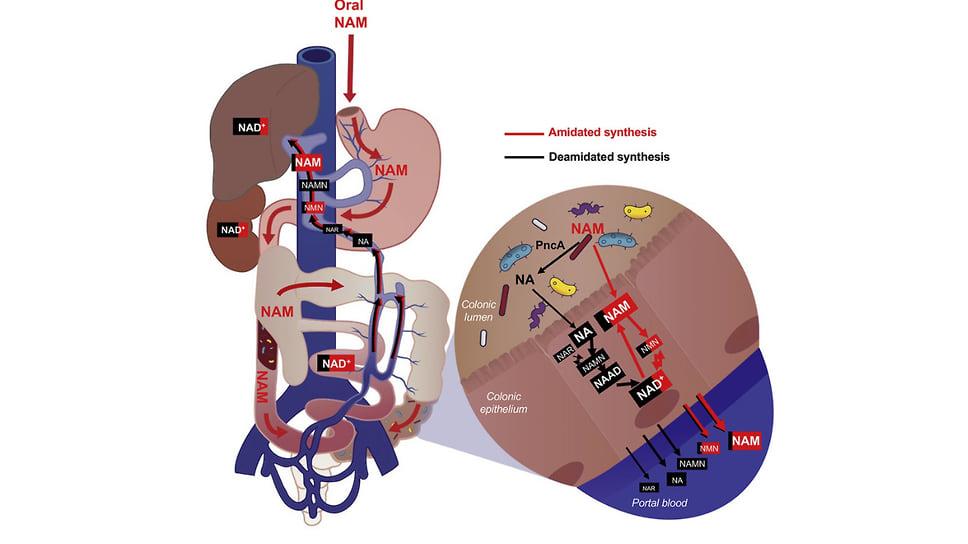 Схематическое представление взаимодействий между микробиомом и раковыми клеткам
