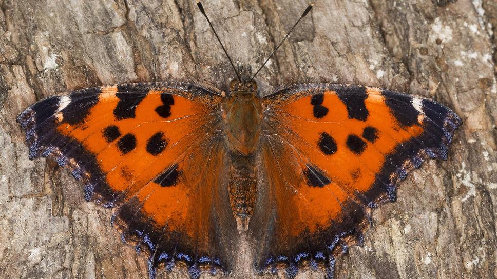Эффект многоцветной бабочки